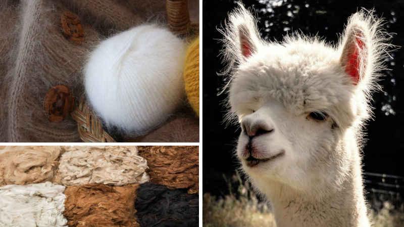 Alpaga et création en laine d'alpaga - Dessous 6 couleurs d'Alpaga différentes