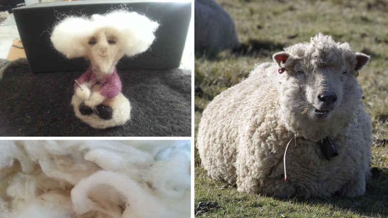 Mouton Mérinos - Laine Mérinos et Personnage avec la chevelure en Laine de Mérinos